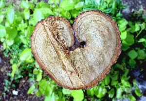 Heart-shaped Tree Trunk. Photography. Encyclopædia Britannica Image Quest. Web. 11 Jun 2013. http://quest.eb.com/images/300_2267995